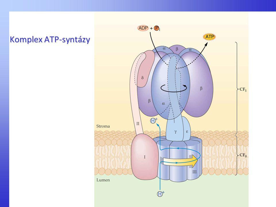 Komplex ATP-syntázy