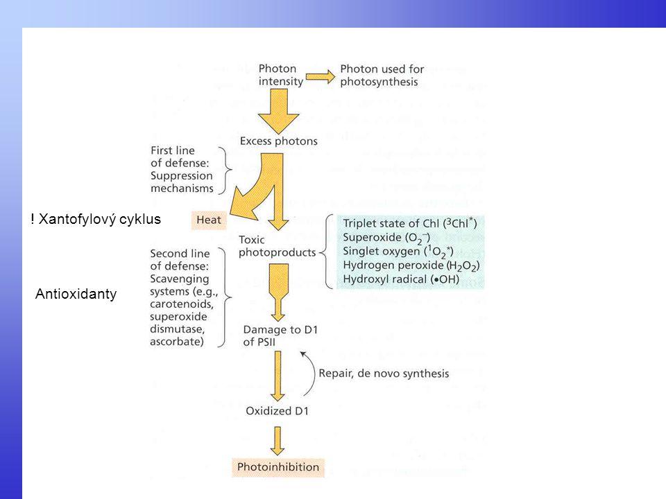 ! Xantofylový cyklus Antioxidanty