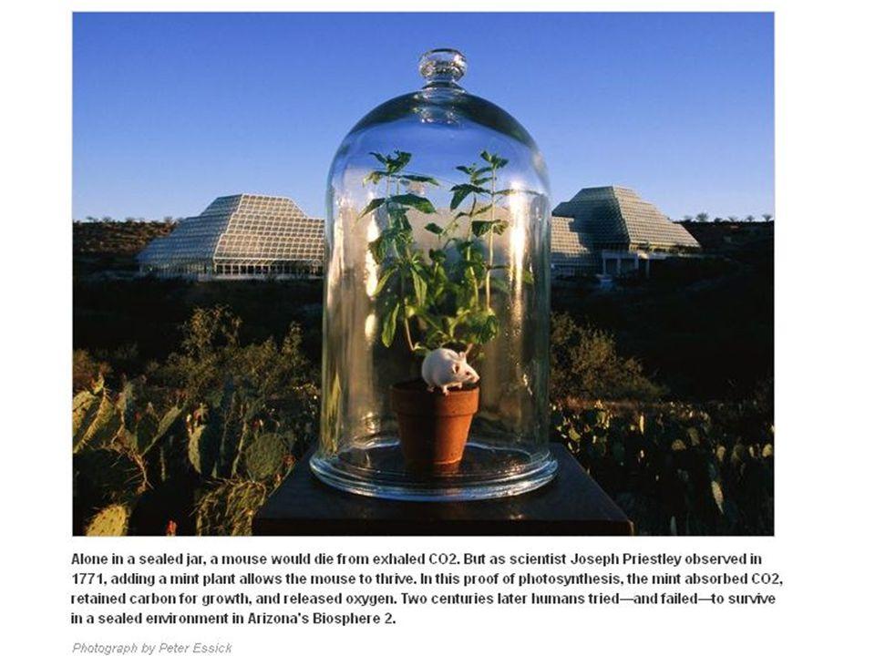 Přeskočme pro tuto chvíli počátky vývoje poznání fotosyntézy od 16 do konce 18 století, kdy už učení lidé věděli, že rostlina potřebuje vodu, mění složení atmosféry, potřebuje k tomu světlo, že vyděluje kyslík a pohlcuje CO2.