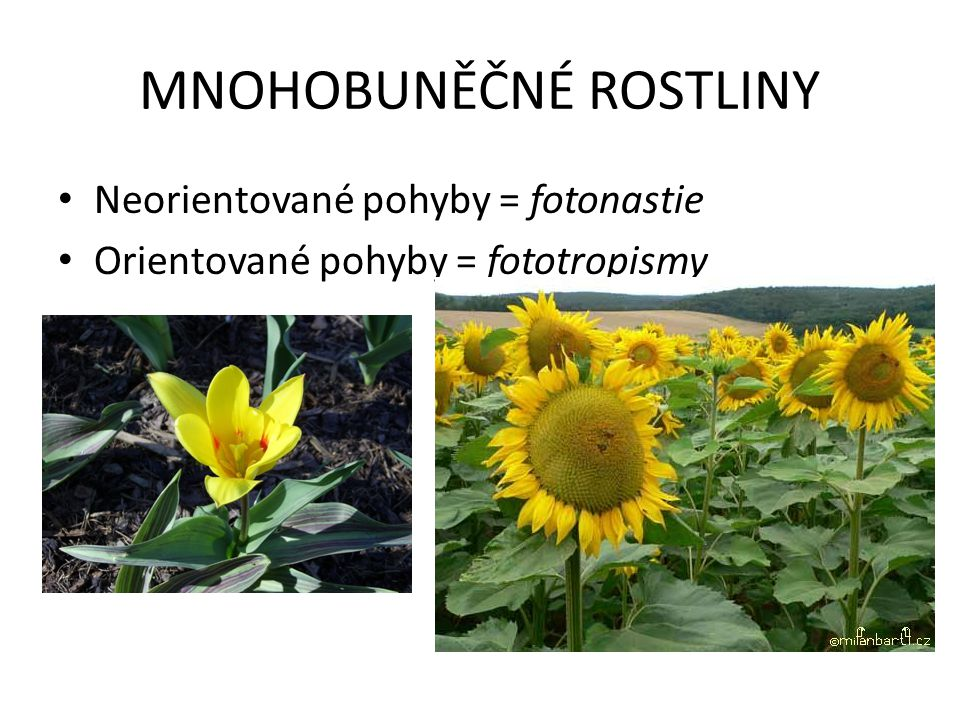 MNOHOBUNĚČNÉ ROSTLINY