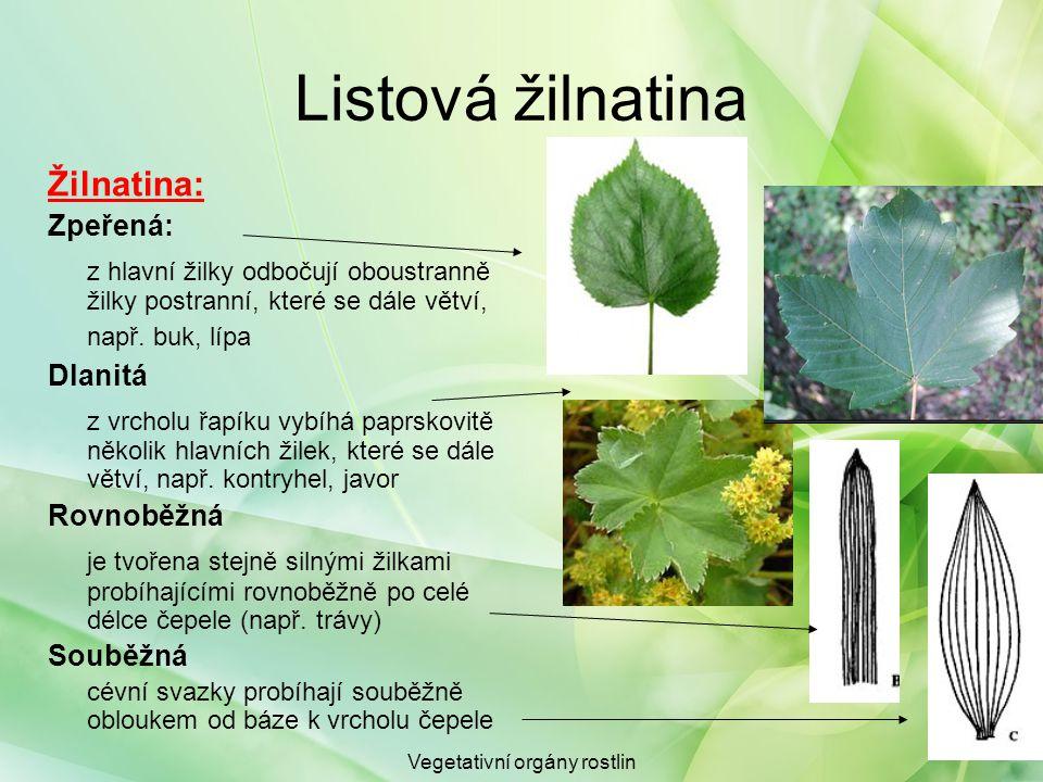 Vegetativní orgány rostlin