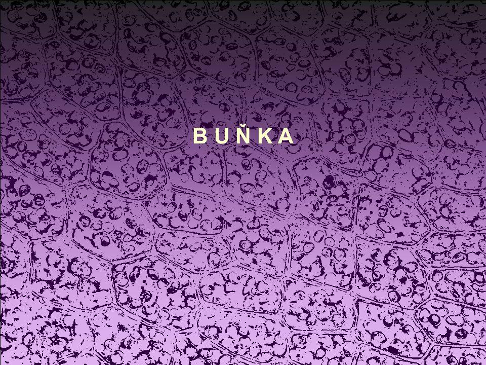 B U Ň K A