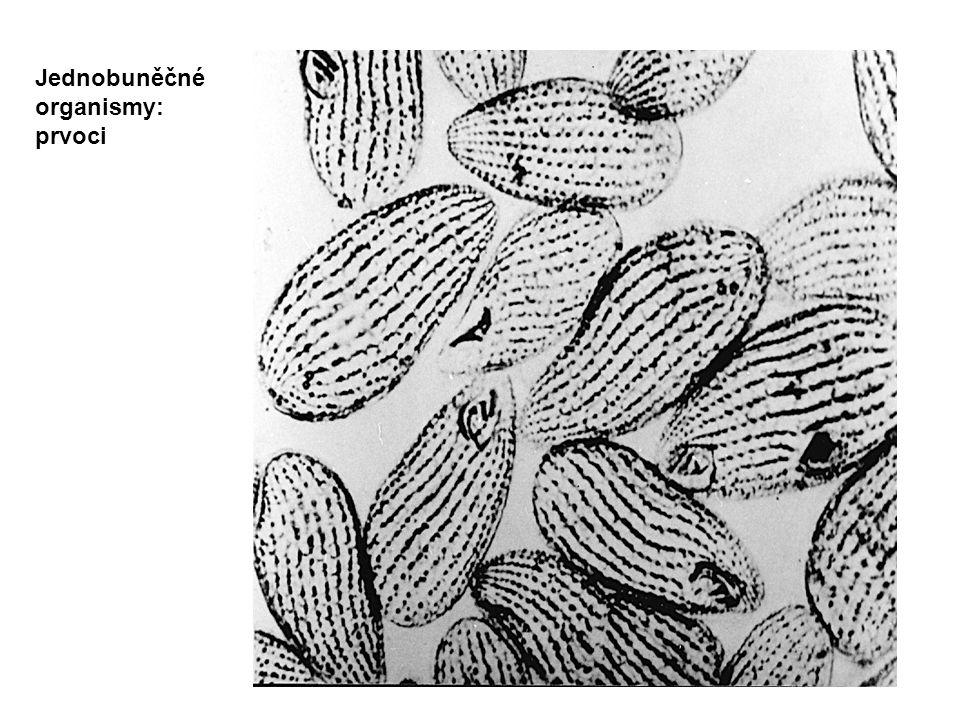 Jednobuněčné organismy: