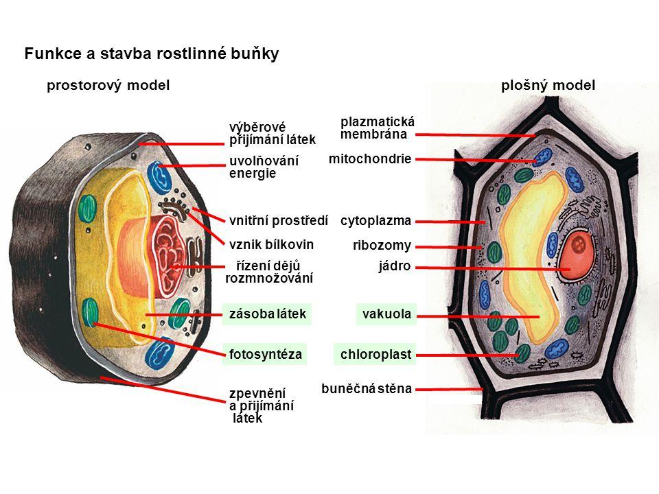 Funkce a stavba rostlinné buňky