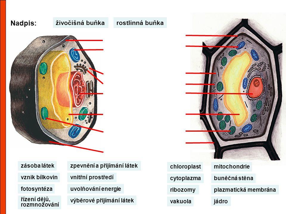 Nadpis: živočišná buňka rostlinná buňka zásoba látek