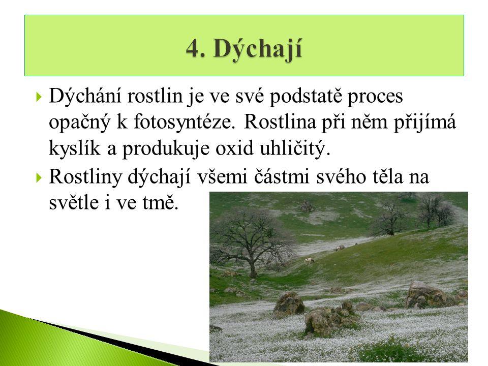 4. Dýchají Dýchání rostlin je ve své podstatě proces opačný k fotosyntéze. Rostlina při něm přijímá kyslík a produkuje oxid uhličitý.