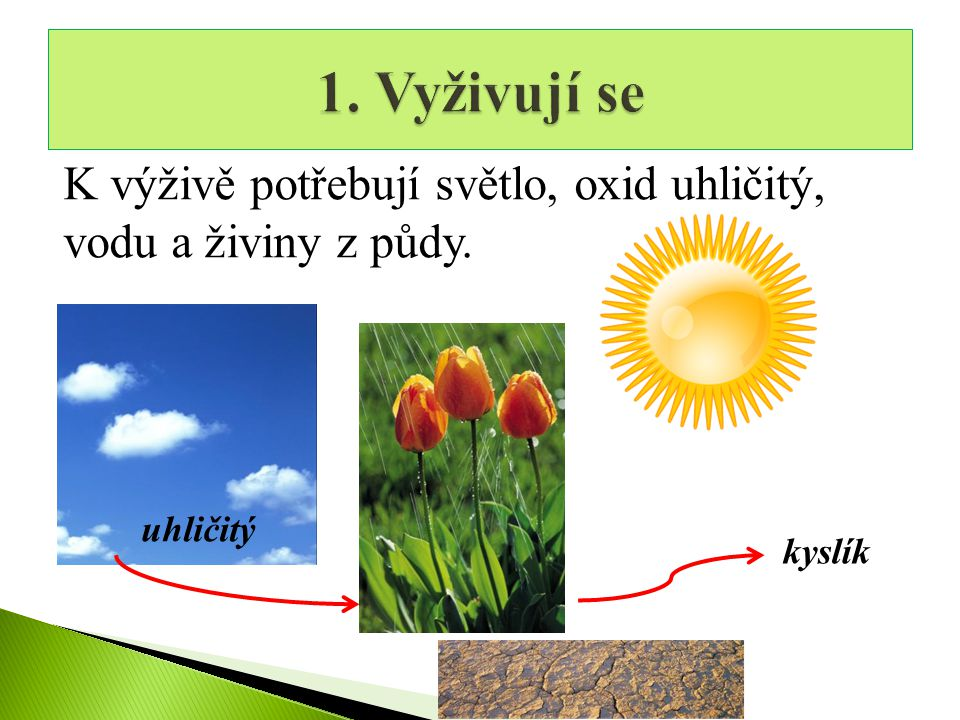 1. Vyživují se K výživě potřebují světlo, oxid uhličitý, vodu a živiny z půdy. uhličitý kyslík