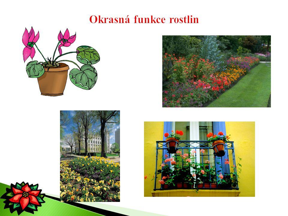 Okrasná funkce rostlin
