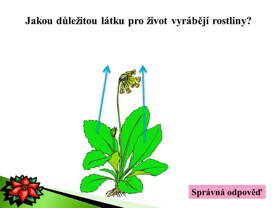 kyslík Jakou důležitou látku pro život vyrábějí rostliny