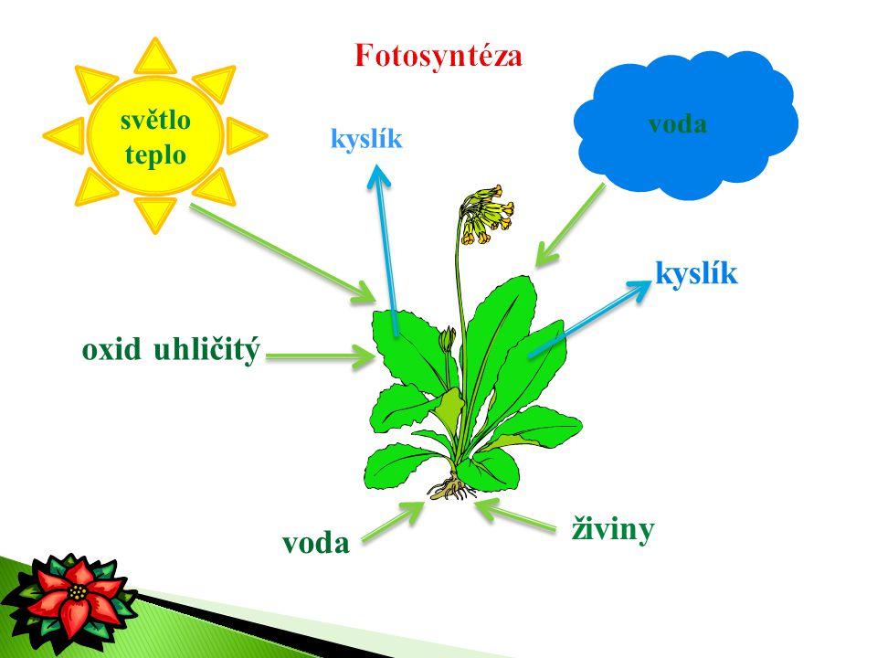 Fotosyntéza světlo teplo voda kyslík kyslík oxid uhličitý živiny voda