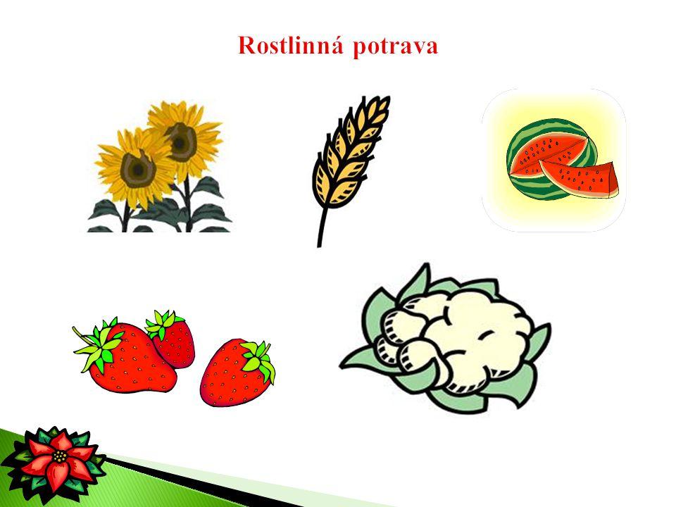 Rostlinná potrava