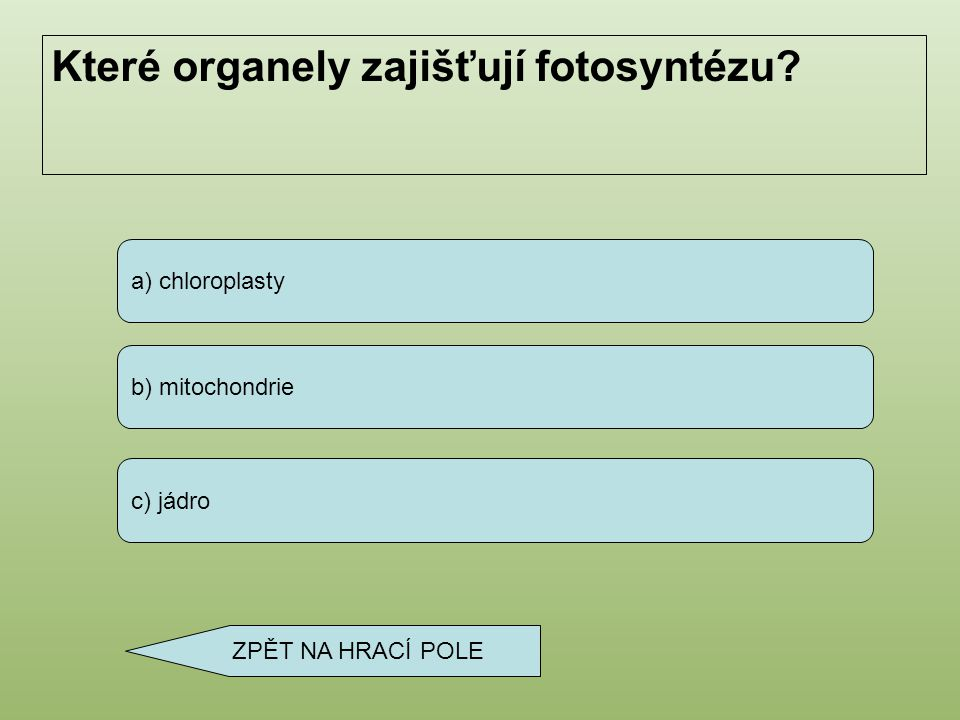 Které organely zajišťují fotosyntézu