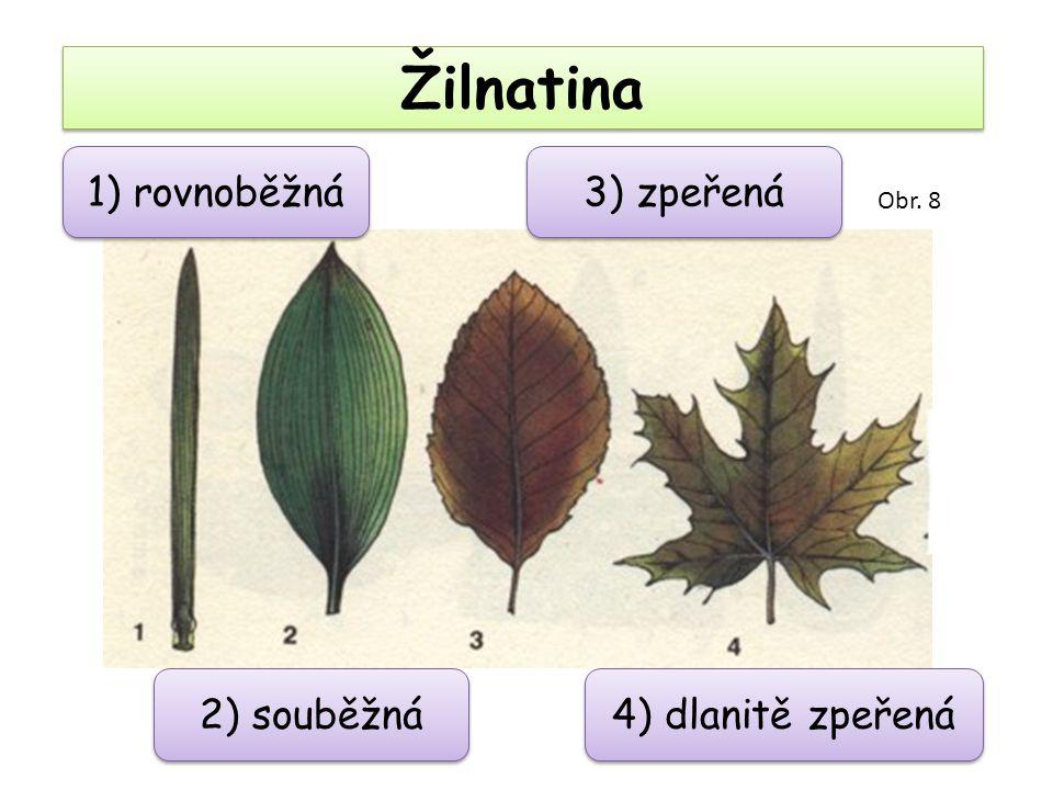 Žilnatina 1) rovnoběžná 3) zpeřená 2) souběžná 4) dlanitě zpeřená