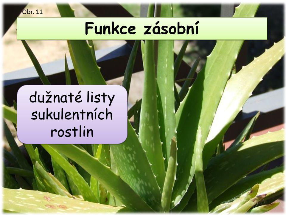 dužnaté listy sukulentních rostlin