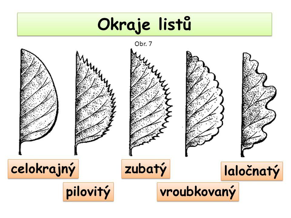 Okraje listů Obr. 7 celokrajný zubatý laločnatý pilovitý vroubkovaný