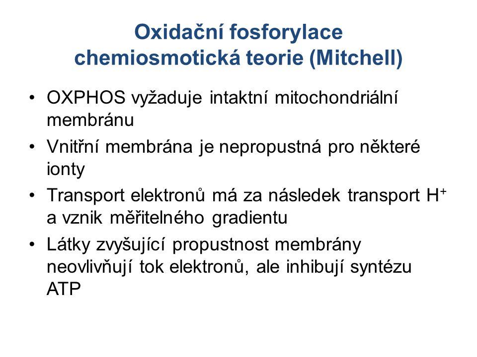 Oxidační fosforylace chemiosmotická teorie (Mitchell)