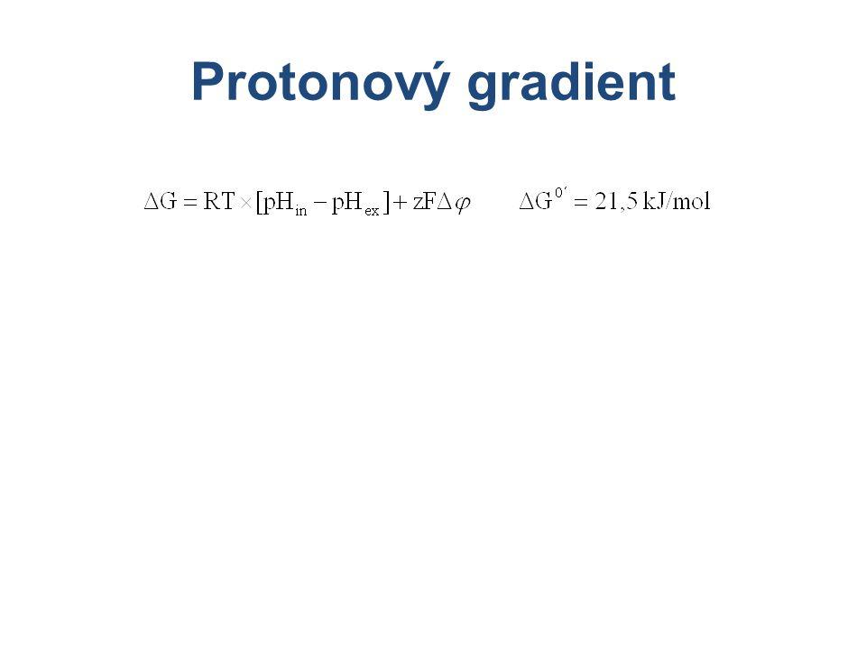 Protonový gradient