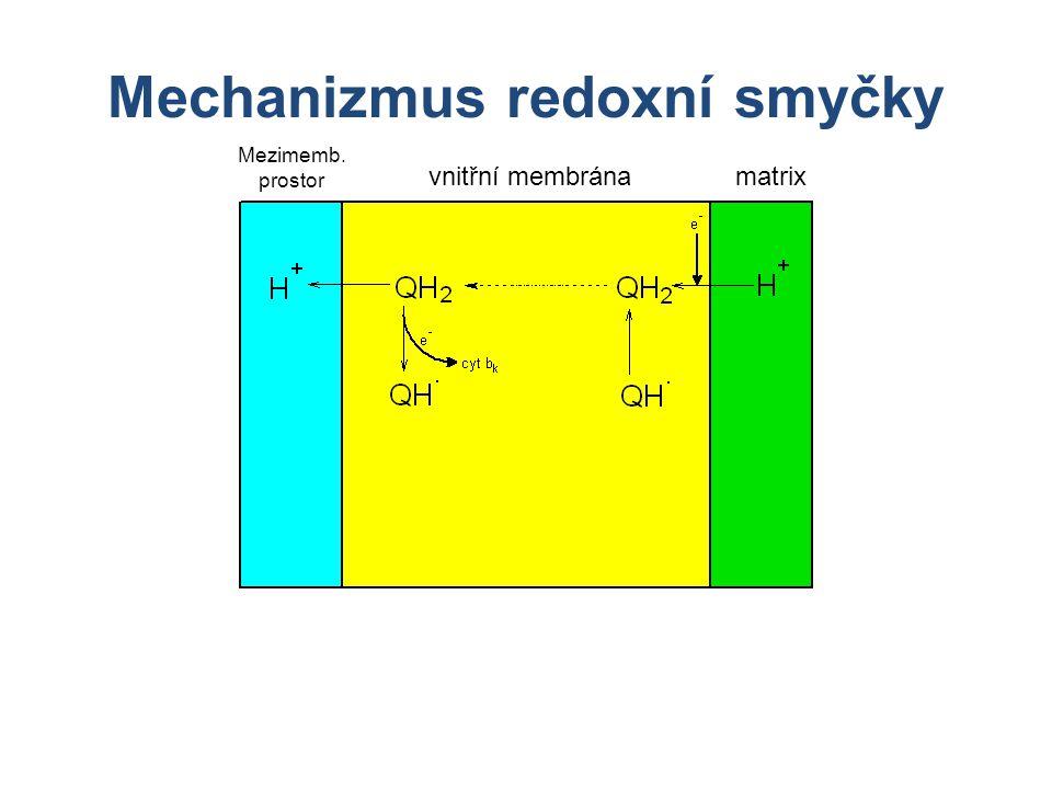 Mechanizmus redoxní smyčky