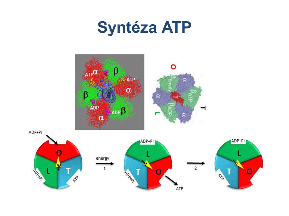 Syntéza ATP