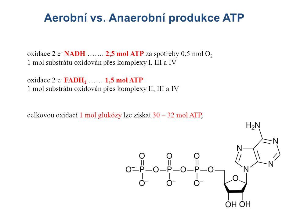 Aerobní vs. Anaerobní produkce ATP