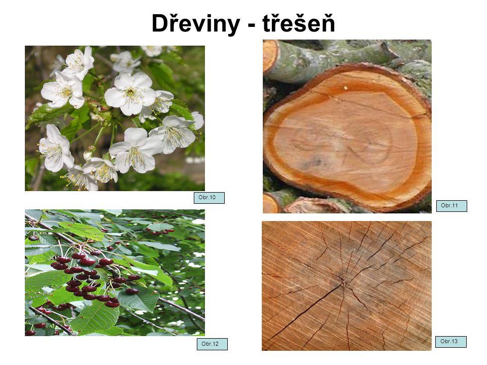 Dřeviny - třešeň Obr.10 Obr.11 Obr.12 Obr.13