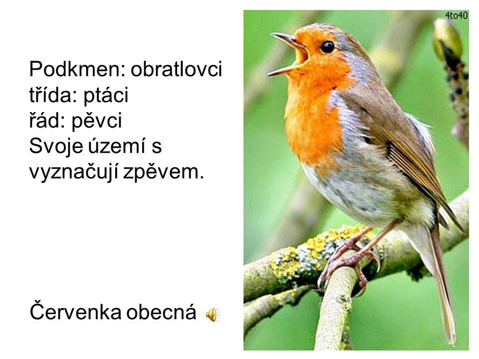 Podkmen: obratlovci třída: ptáci řád: pěvci Svoje území s vyznačují zpěvem.