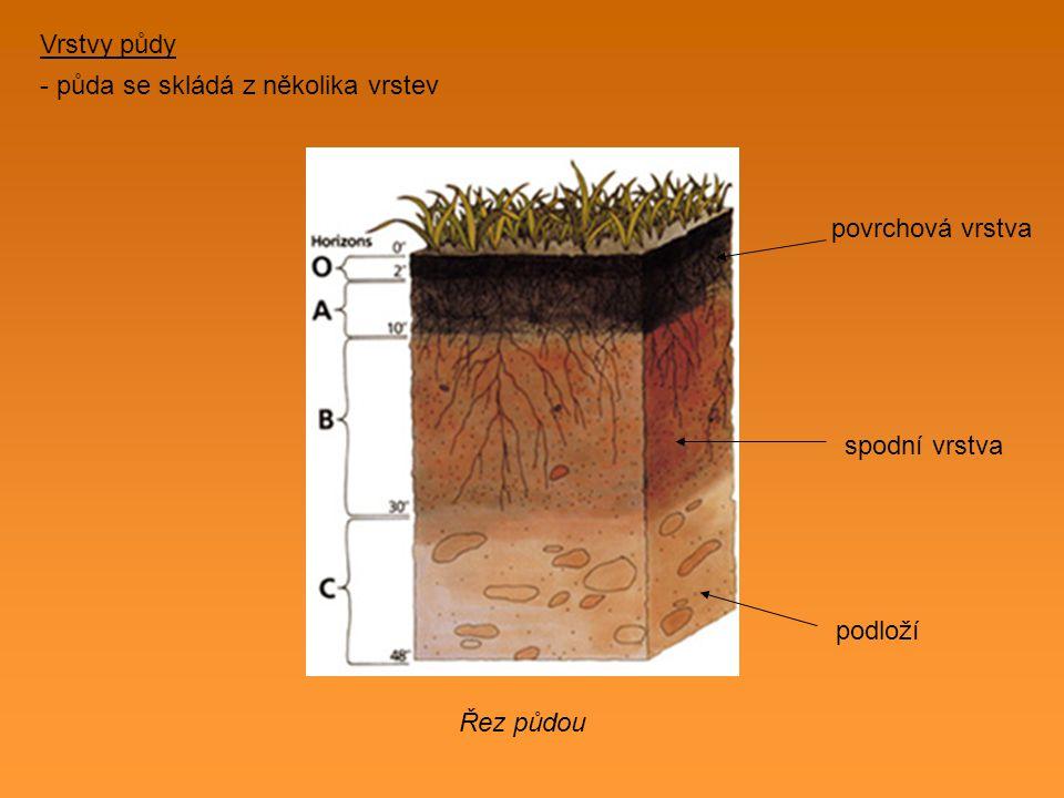 Vrstvy půdy - půda se skládá z několika vrstev povrchová vrstva spodní vrstva podloží Řez půdou