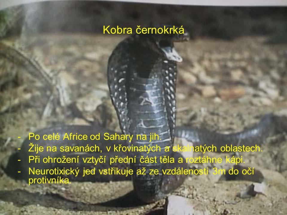 Kobra černokrká Po celé Africe od Sahary na jih.