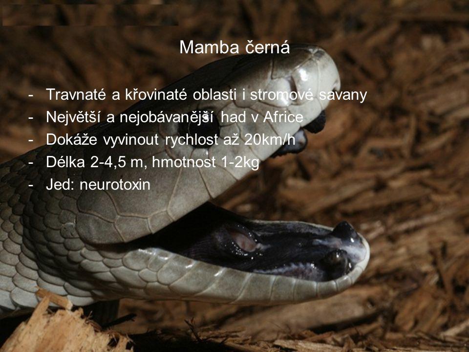 Mamba černá Travnaté a křovinaté oblasti i stromové savany