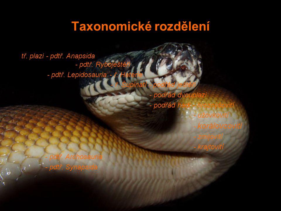 Taxonomické rozdělení