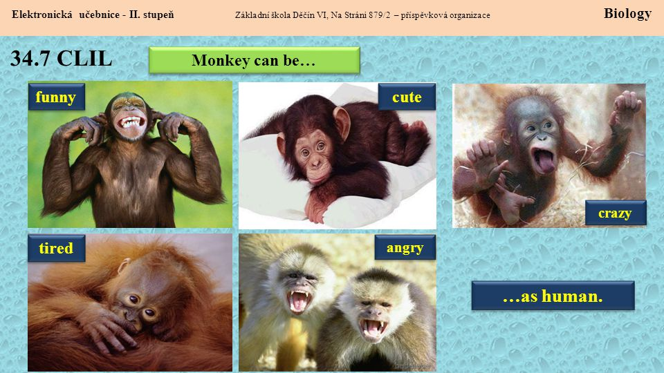 34.7 CLIL …as human. Monkey can be… funny cute tired crazy angry