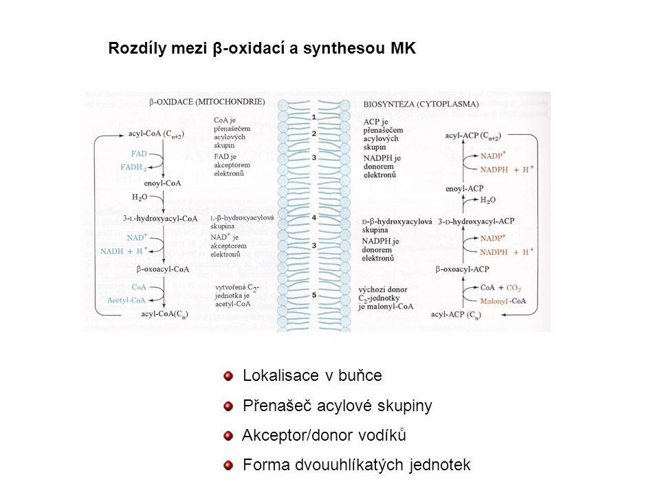 Rozdíly mezi β-oxidací a synthesou MK