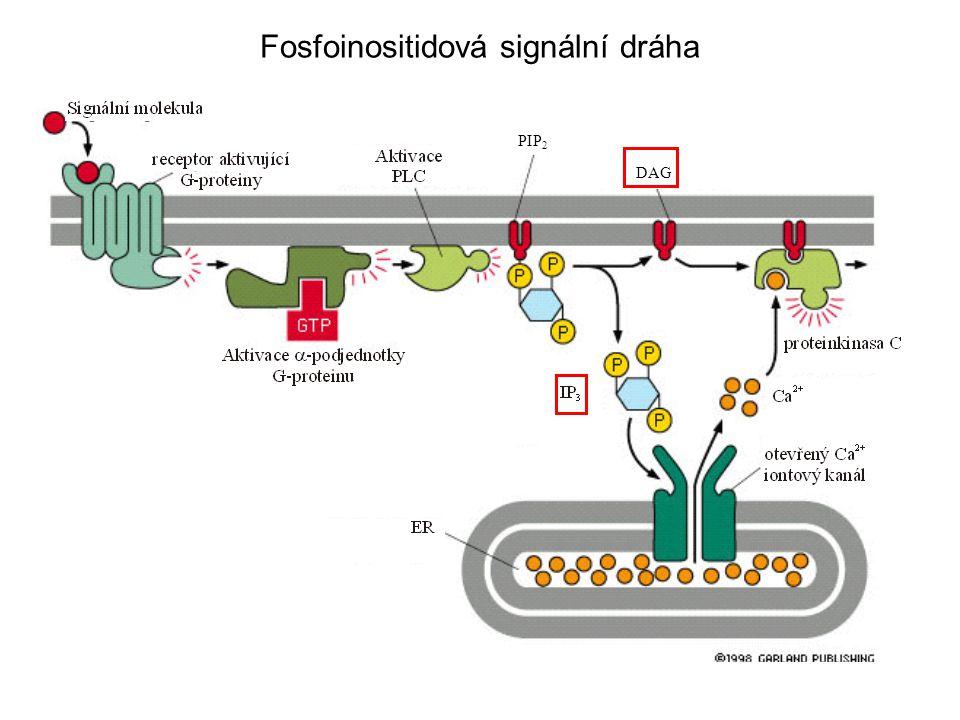 Fosfoinositidová signální dráha