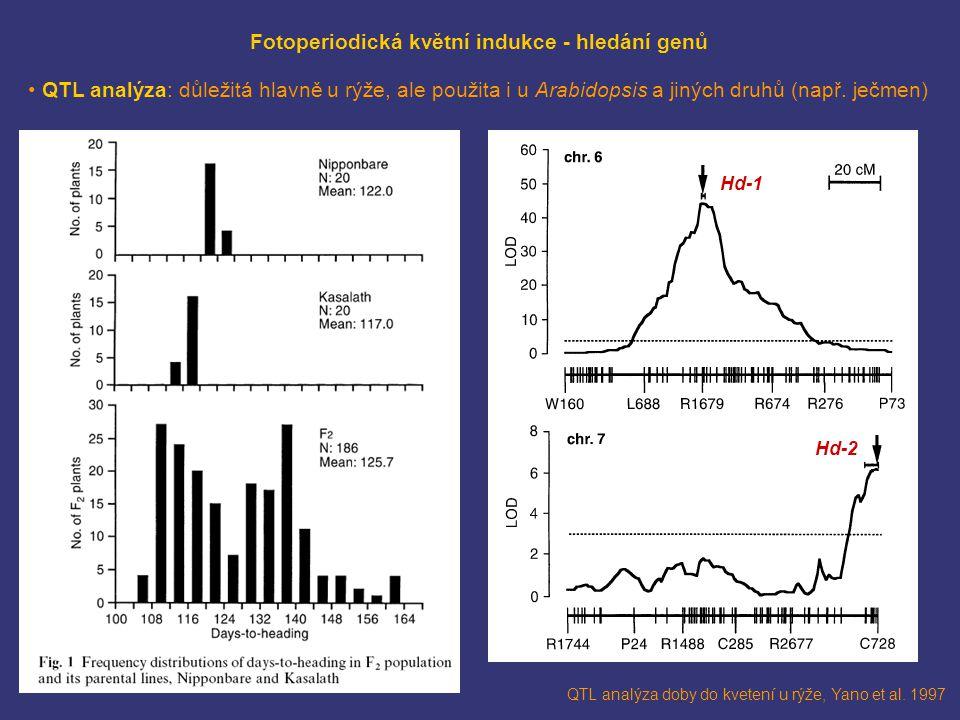 Fotoperiodická květní indukce - hledání genů