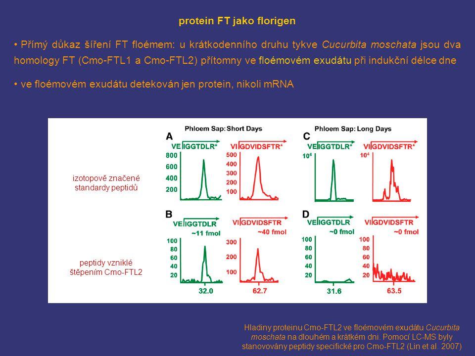 protein FT jako florigen