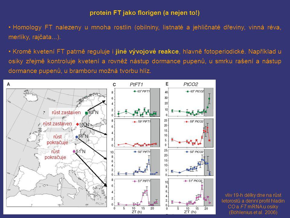 protein FT jako florigen (a nejen to!)