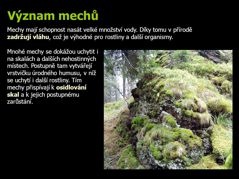 Význam mechů Mechy mají schopnost nasát velké množství vody. Díky tomu v přírodě zadržují vláhu, což je výhodné pro rostliny a další organismy.