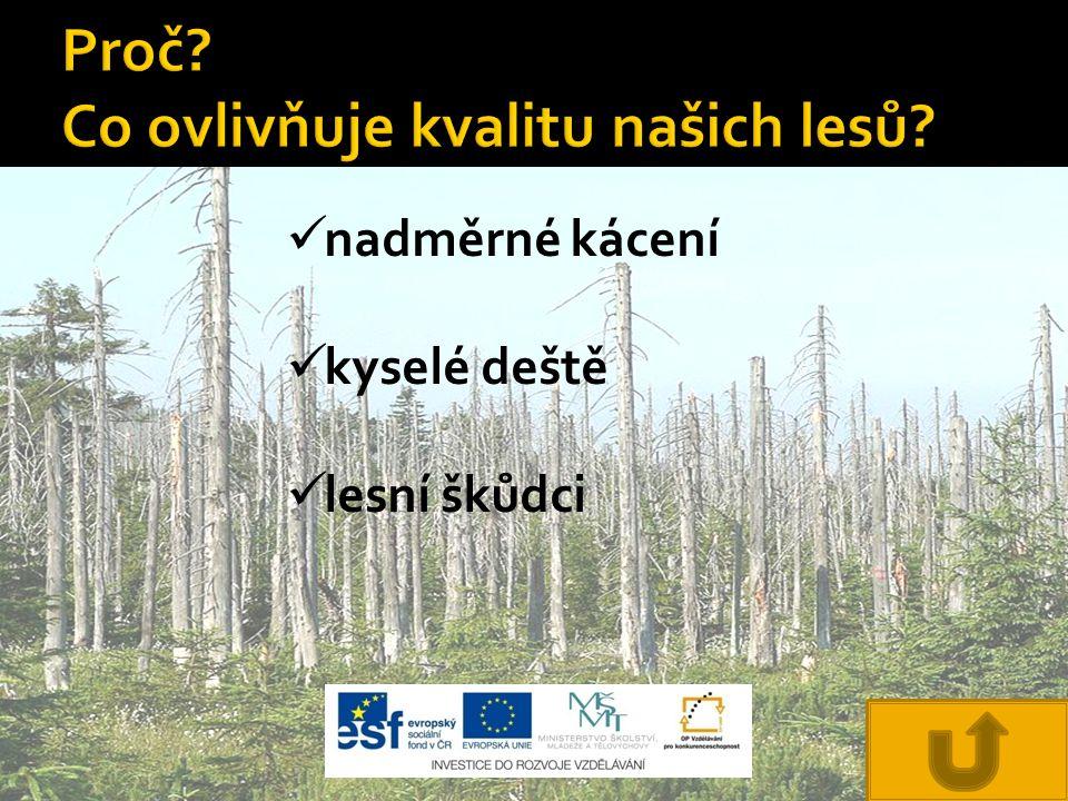 Proč Co ovlivňuje kvalitu našich lesů