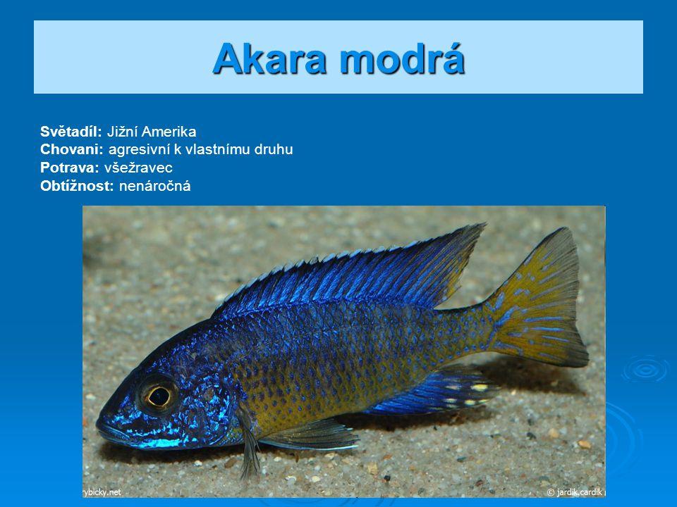 Akara modrá Světadíl: Jižní Amerika