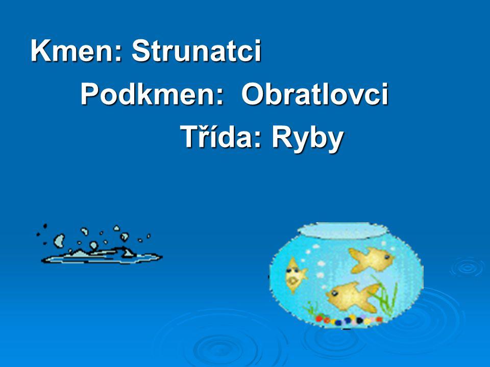 Kmen: Strunatci Podkmen: Obratlovci Třída: Ryby