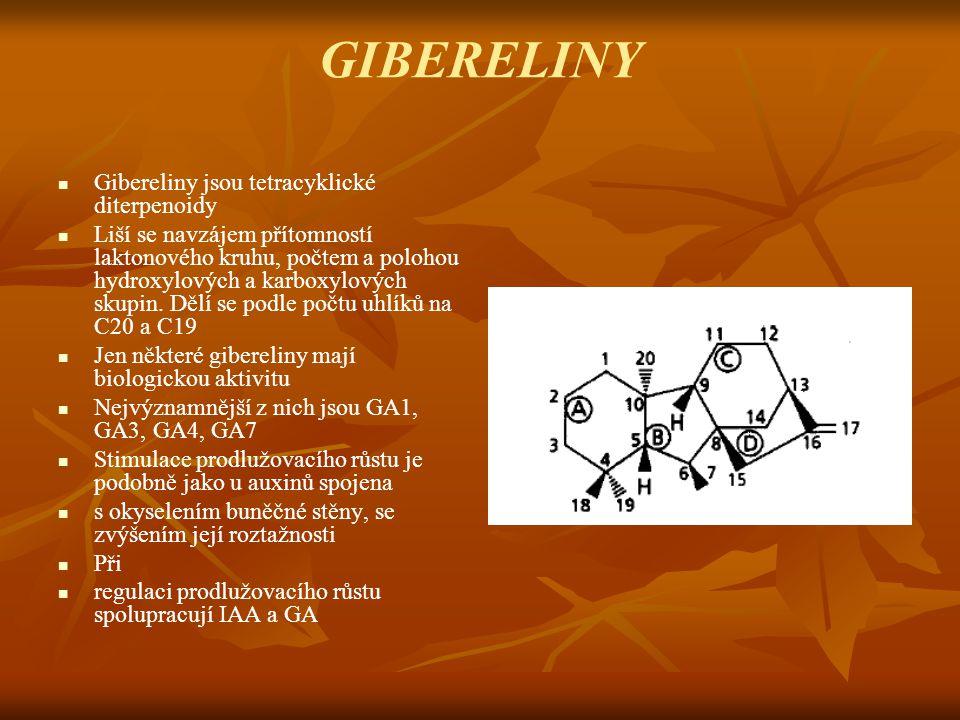 GIBERELINY Gibereliny jsou tetracyklické diterpenoidy