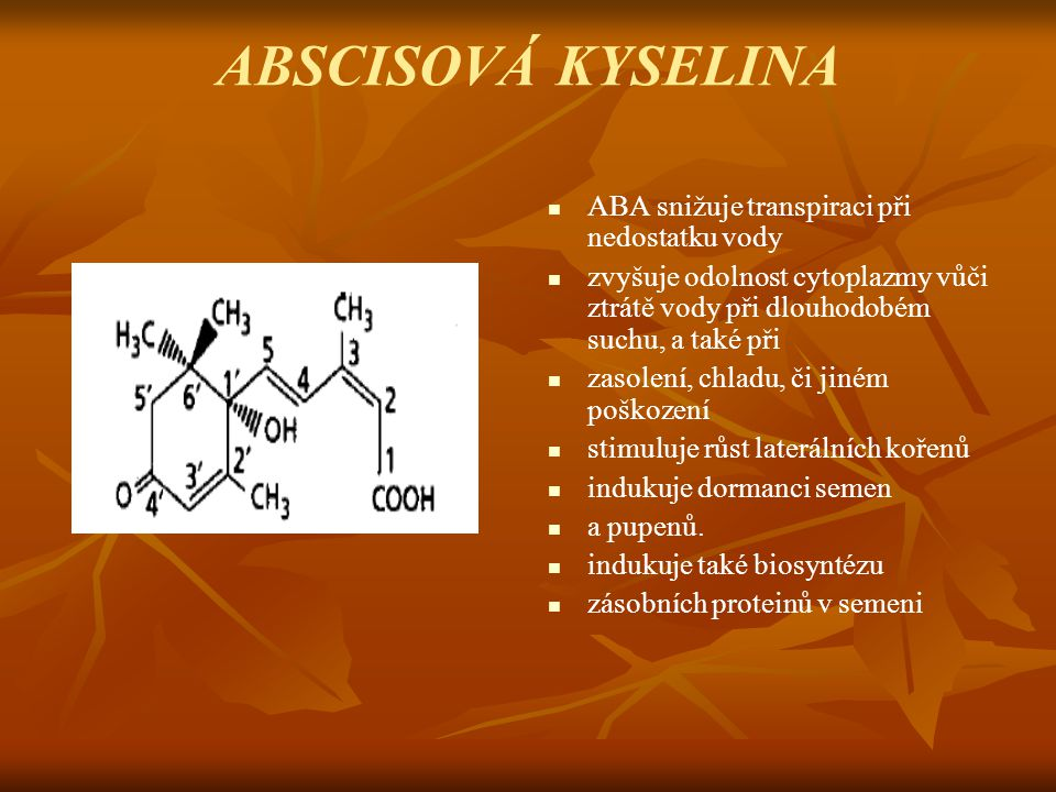 ABSCISOVÁ KYSELINA ABA snižuje transpiraci při nedostatku vody