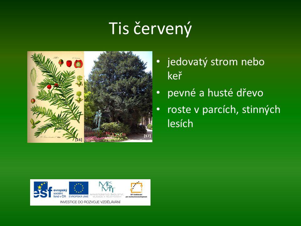 Tis červený jedovatý strom nebo keř pevné a husté dřevo