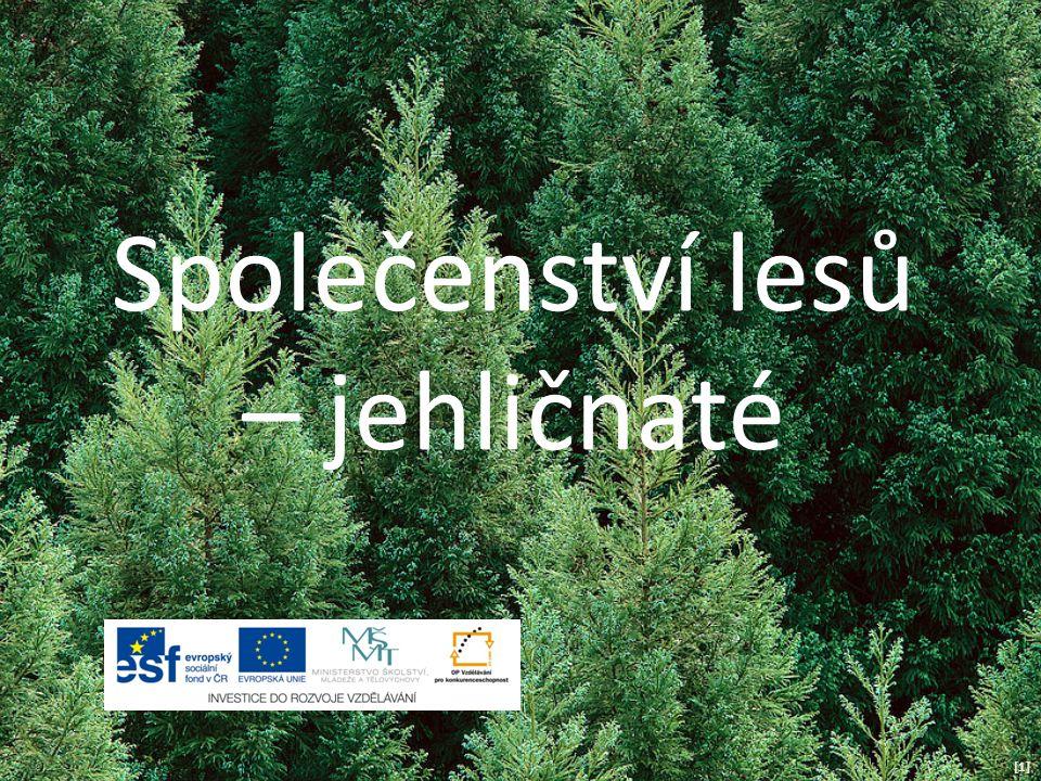 Společenství lesů – jehličnaté