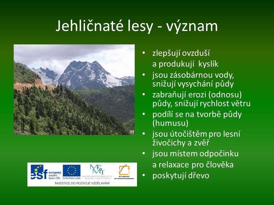 Jehličnaté lesy - význam