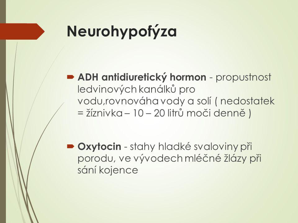Neurohypofýza