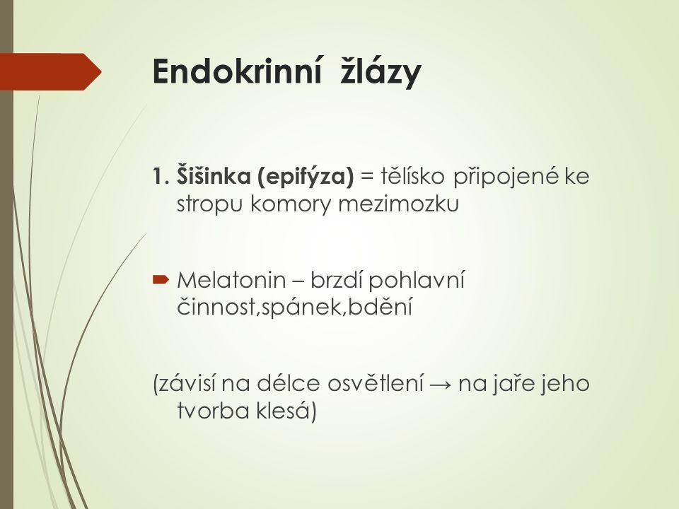Endokrinní žlázy 1. Šišinka (epifýza) = tělísko připojené ke stropu komory mezimozku. Melatonin – brzdí pohlavní činnost,spánek,bdění.