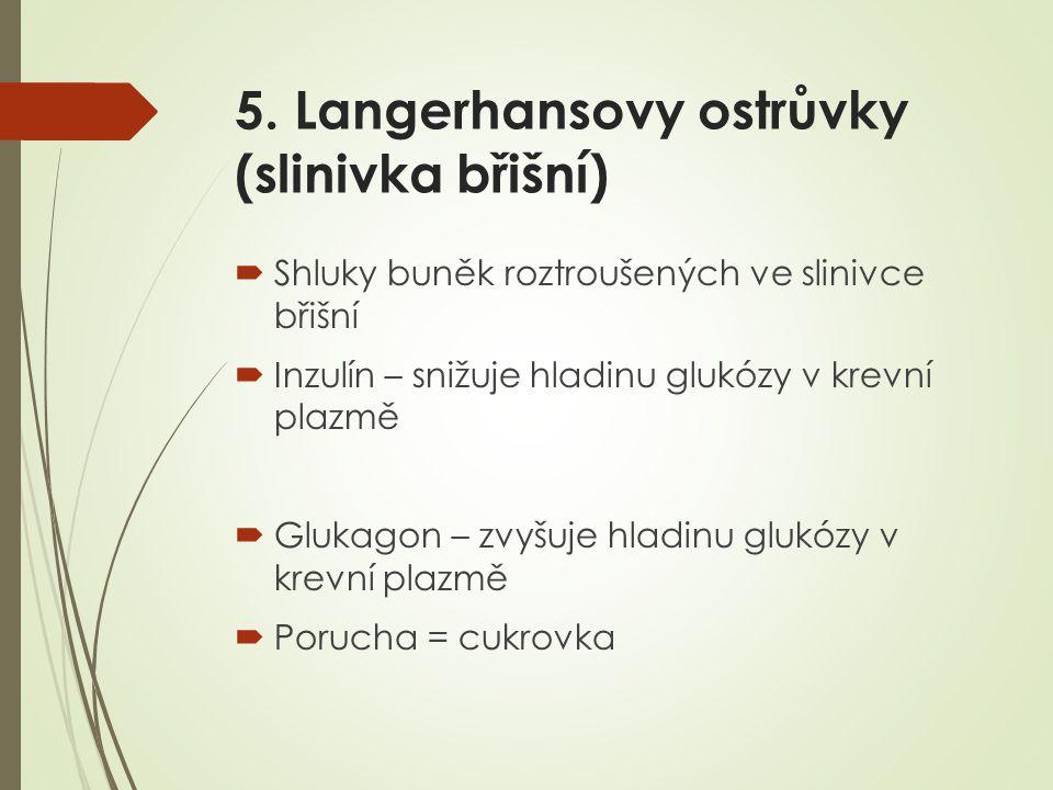 5. Langerhansovy ostrůvky (slinivka břišní)