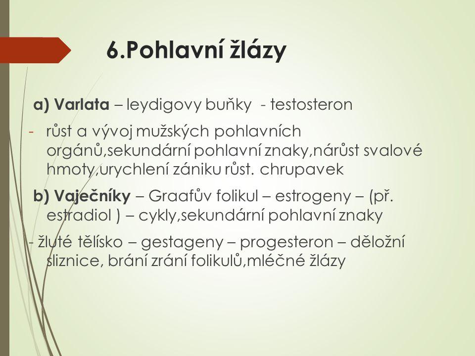 6.Pohlavní žlázy a) Varlata – leydigovy buňky - testosteron