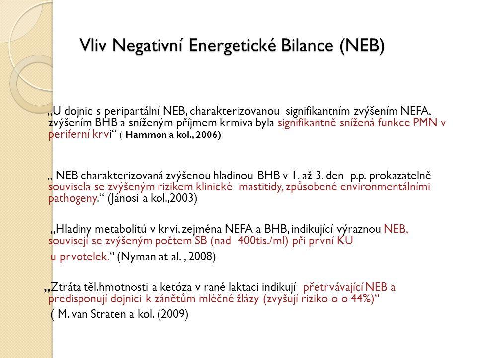 Vliv Negativní Energetické Bilance (NEB)